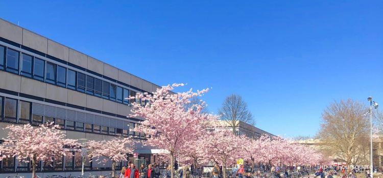 哥廷根大學2