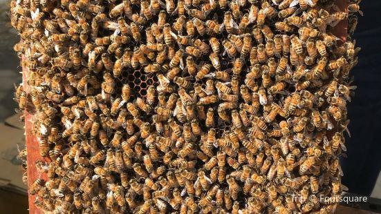 清境養蜂場