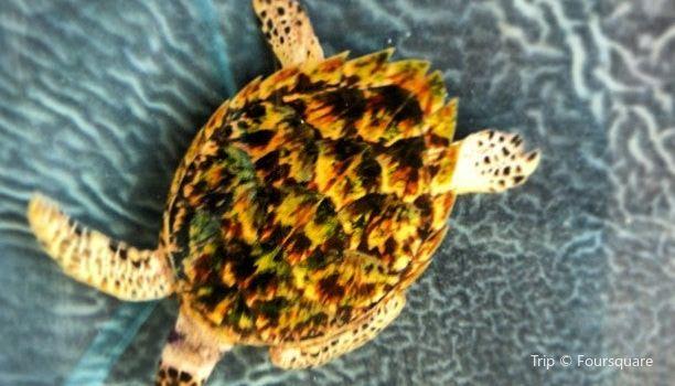 Old Hegg Turtle Sanctuary1