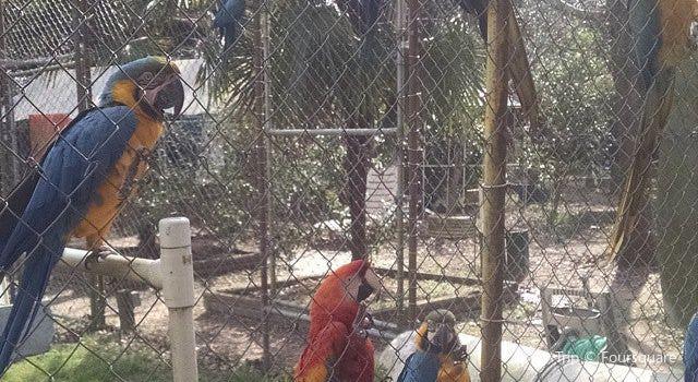 Uncle Sandy's Macaw Bird Park2
