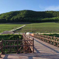 雁鳴湖濕地用戶圖片
