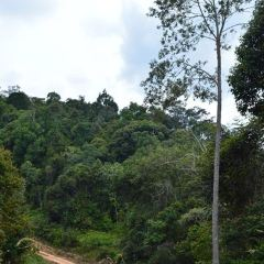 Kinabatangan Jungle Camp用戶圖片