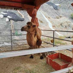 邯鄲佛山野生動物園用戶圖片