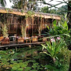 Manda de Laos User Photo
