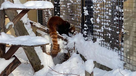 Asahiyama Zoo Mogumogu Shokudou
