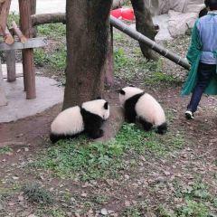 重慶動物園用戶圖片