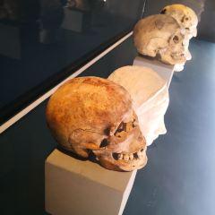 Museo Vesuviano User Photo