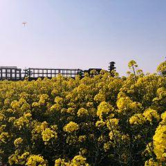 Qianduo (Raised Wetland Fields) Scenic Area User Photo
