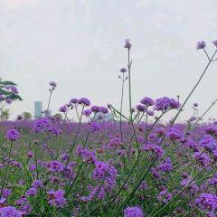 즈윈화시 라벤더공원 여행 사진
