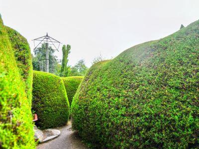 雅思迷宮及薰衣草花園