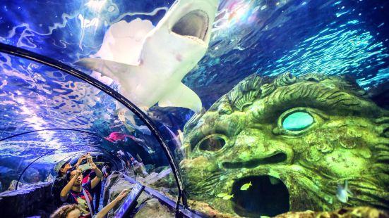 悉尼水族館