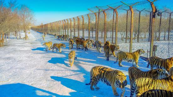 Northeast Tiger Forest Park