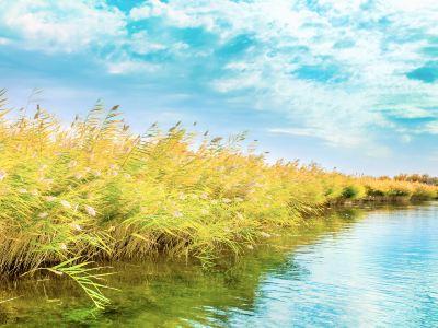 Gaoyou Lake Reed Wetland Park