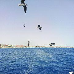 Nabq灣用戶圖片