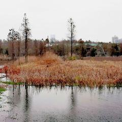大象湖濕地公園用戶圖片
