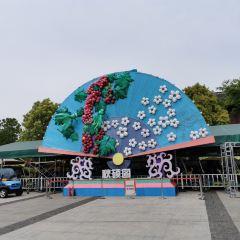 우한 가든엑스포 여행 사진