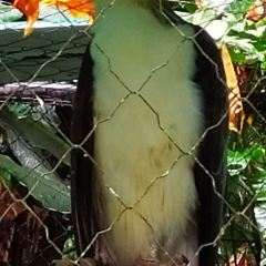 Philippine Eagle Centre User Photo