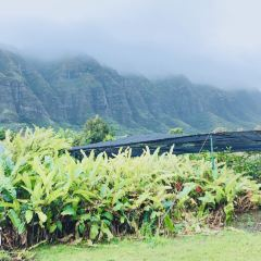 Kualoa Ranch User Photo