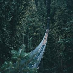 Capilano Suspension Bridge Park User Photo