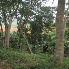 Kalamatiya Bird Sanctuary用戶圖片