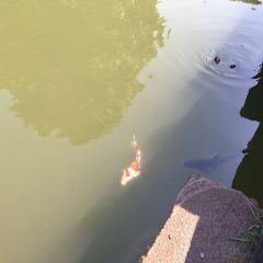 하마리큐온시 정원 여행 사진