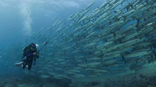 詩巴丹潛水