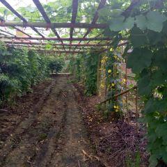 Garden Jialebi Paradise User Photo