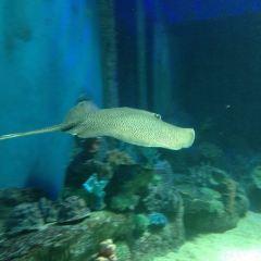 Underwater World Langkawi User Photo