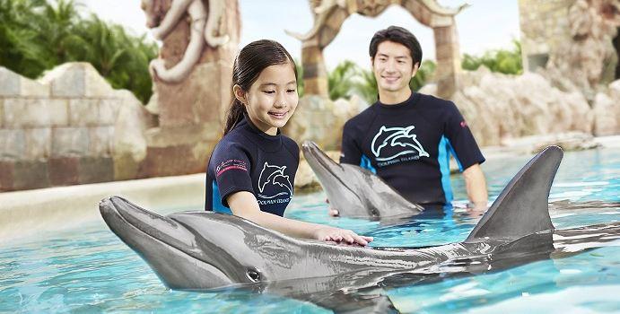 Dolphin Island2