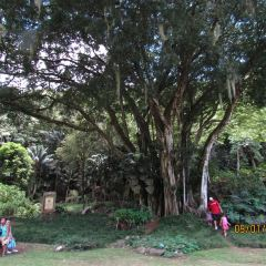Waimea Valley User Photo