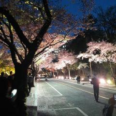 경북대학교 여행 사진