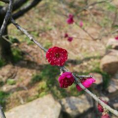 Changxinggu Forest Museum User Photo