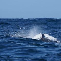 Dolphin Encounter用戶圖片