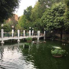 Kowloon Park User Photo
