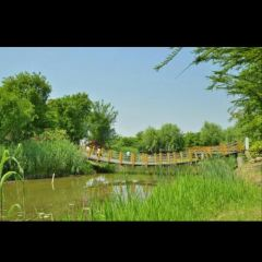 Dabaidang City Ecological Park (West Gate) User Photo