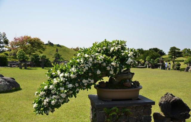 생각하는정원 (Spirited Garden)