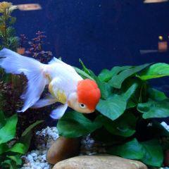 Goldfish Treasures User Photo