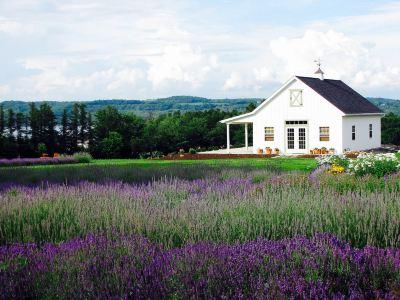 Lockwood Lavender Farm
