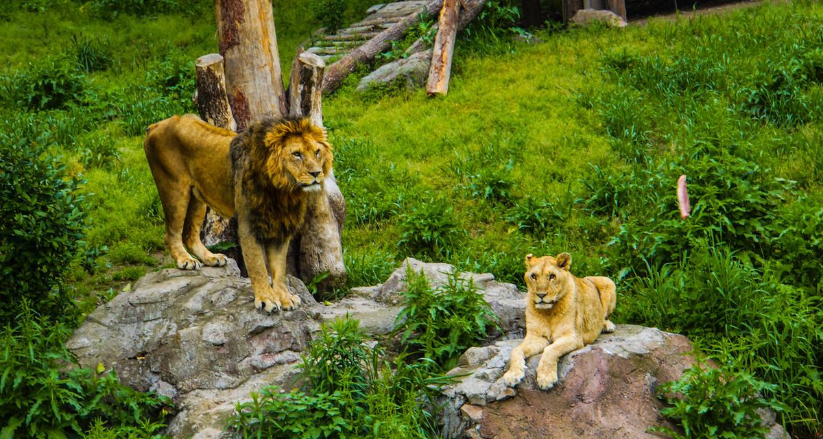 雅戈尔動物園