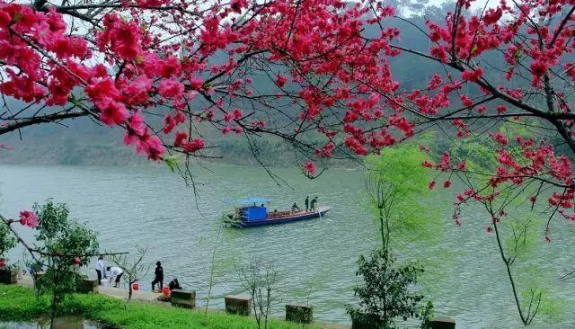 齊雲山首屆賞花風箏節:與你邂逅在這個春天裡
