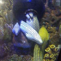 줘하이 해저세계 여행 사진