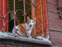 """名副其實的""""貓城"""",這座城市是貓咪的天下,貓奴必看"""