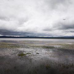 貢賽爾喀木道濕地景區用戶圖片