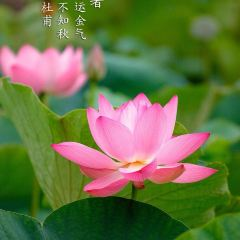 Tianchi Park User Photo