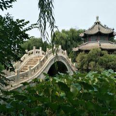 Ancient Lotus Flower Pond User Photo