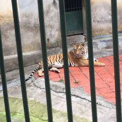 Zunyi Zoo (Northwest Gate 1) User Photo