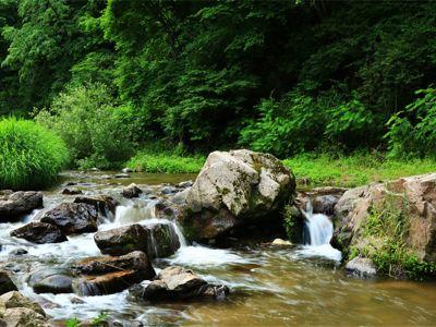 玉龍溪原始森林公園
