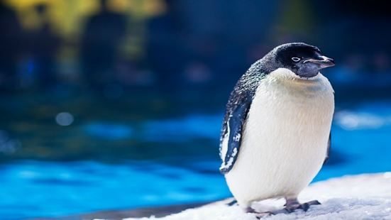 極地動物展示區