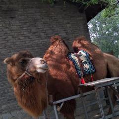 Aixin Zoo User Photo