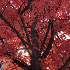 Hongchagou Forest Park User Photo